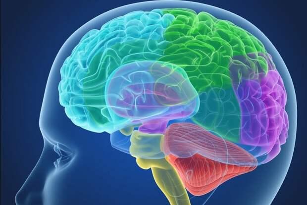 Ученые выяснили, как мозг человека отличает речь от шума