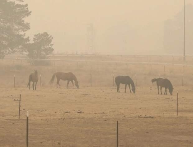 В результате лесных пожаров в Австралии погибло более 1 млрд животных