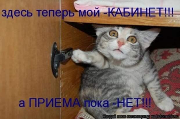 1300413766_kotomatritsa-19