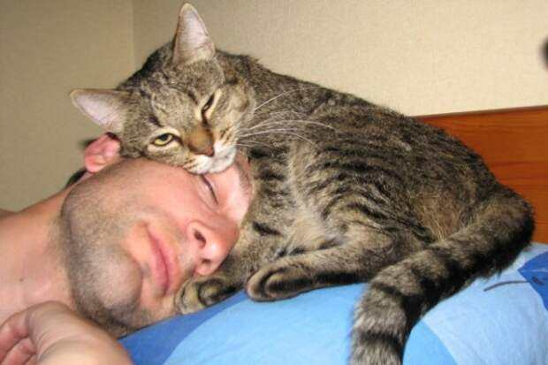 Как кошка признается человеку в любви