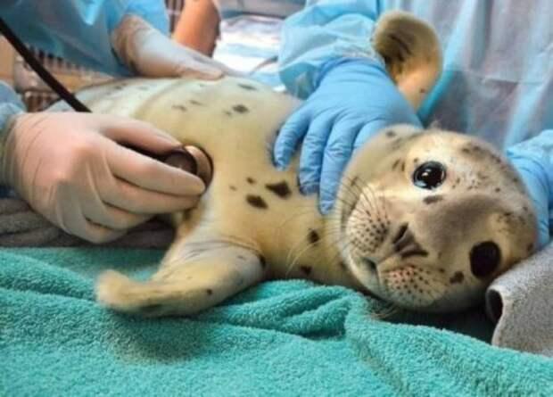 Фотографии с животными, которые, хотите вы этого или нет, заставят вас улыбнуться (32 фото)