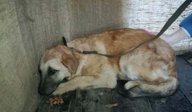Девушка 6 месяцев гонялась за испуганным псом, не желая оставлять его в лесу