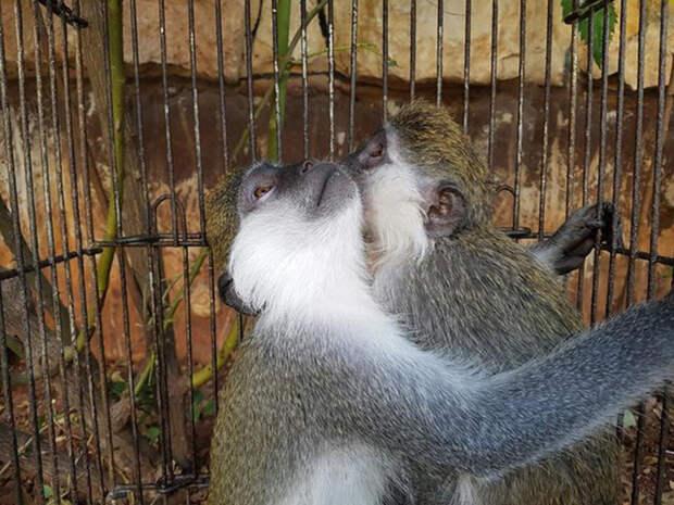Спасенные обезьянки.