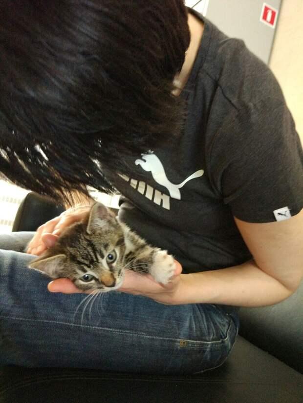 Взяла его на руки, погладила, а он сразу замурчал и быстро заснул прямо на руках...