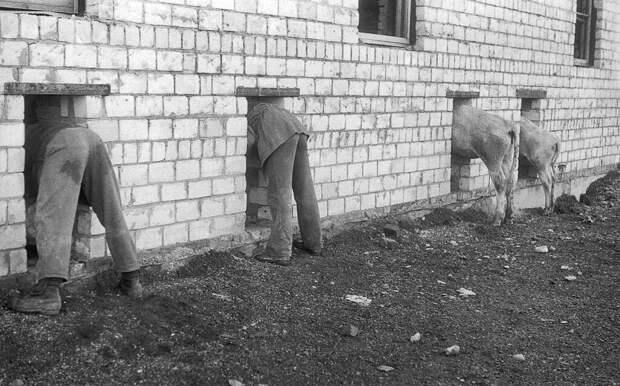 Строительство коровника Павел Сухарев, 28 мая 1984 - 13 августа 1984 года, Красноярский край, Хакасская АО, Усть-Абаканский, р-н совхоз «Усть-Абаканский», из архива Павла Сергеевича Сухарева.