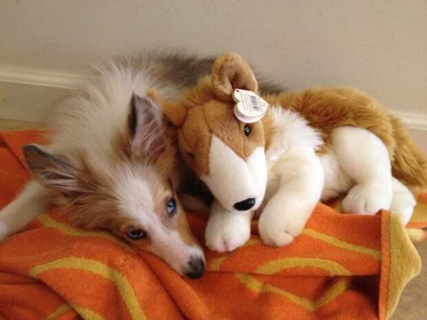 Зверушки и их игрушки