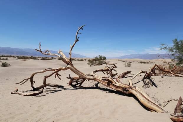 Жара до +33 градусов ожидается в Удмуртии в понедельник