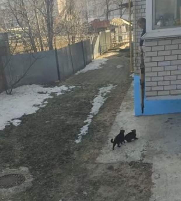 Иностранцы завидуют нашей смекалке: как вернуть кошку в дом без лишних усилий