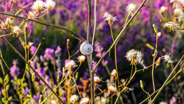 Цветы помогут справиться с насекомыми-вредителями