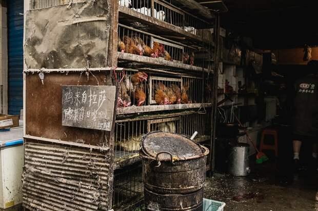 shigadze38 В поисках волшебства: Шигадзе, резиденция Панчен ламы и китайский рынок