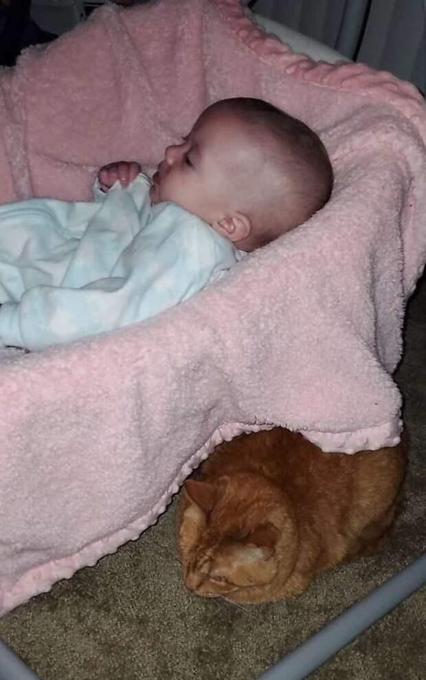 Хозяева были уверены, что их кот недолюбливает новорожденную дочь, пока не узнали, что тот делает по ночам