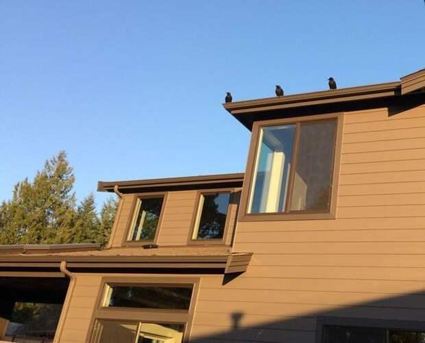 Стюарт Далквист из Сиэтла в течение 4 лет кормил воронью семью, но не ожидал от них настоящего подношения Стюарт Далквист, в мире, ворона, дар, добро, история, люди, птицы