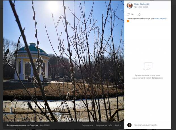 Фото дня: цветущая верба на фоне Храма Воздуха