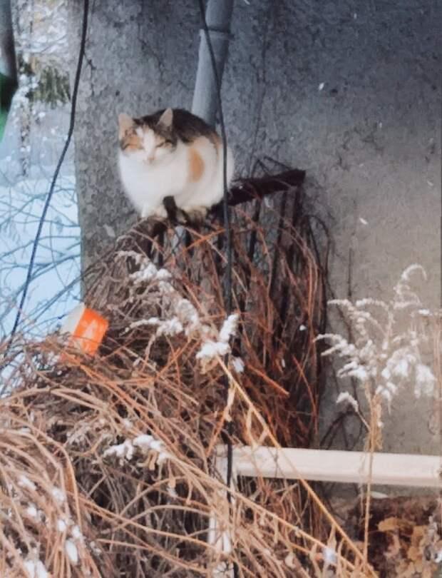 Жертвы людского предательства пытаются выжить в пустом садоводстве, на улице даже вода мгновенно замерзает.
