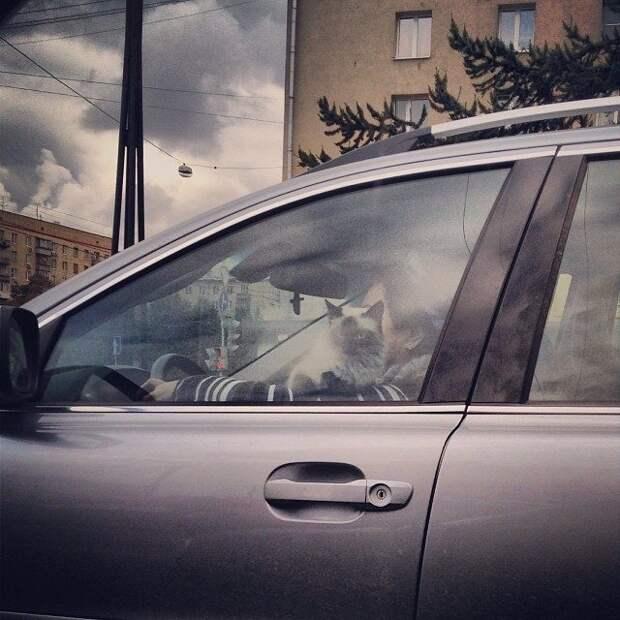 Женщинам за рулём посвящается! Это шедевры!