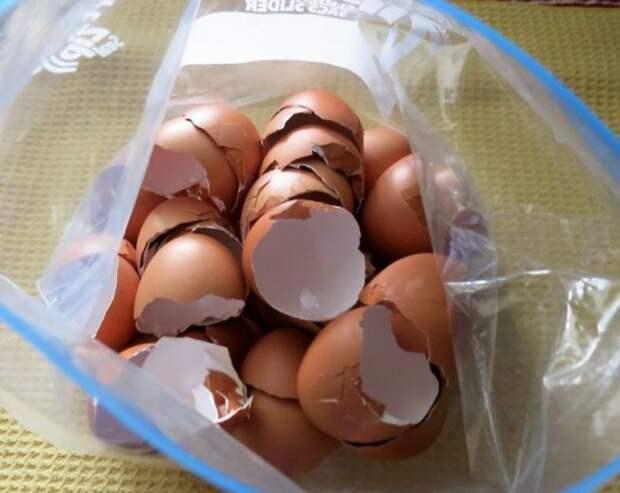 Как хранить яичную скорлупу