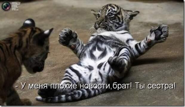 kotomatritsa_GX