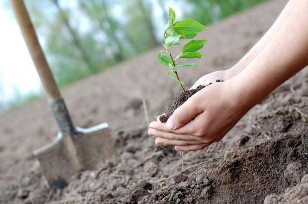 За год в Ленобласти появилось 425 гектаров нового леса