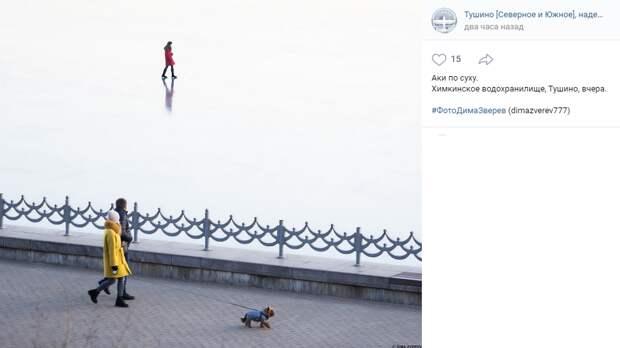 Фото дня: хождение по воде в Тушине