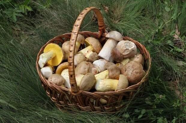 Минприроды установило правила для сбора ягод и грибов в России