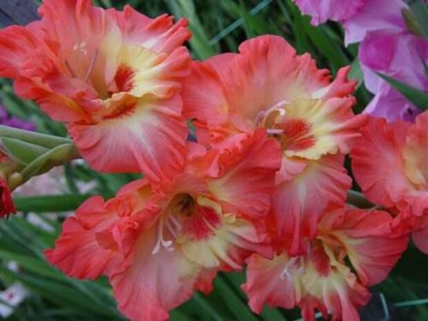 цветник в октябре