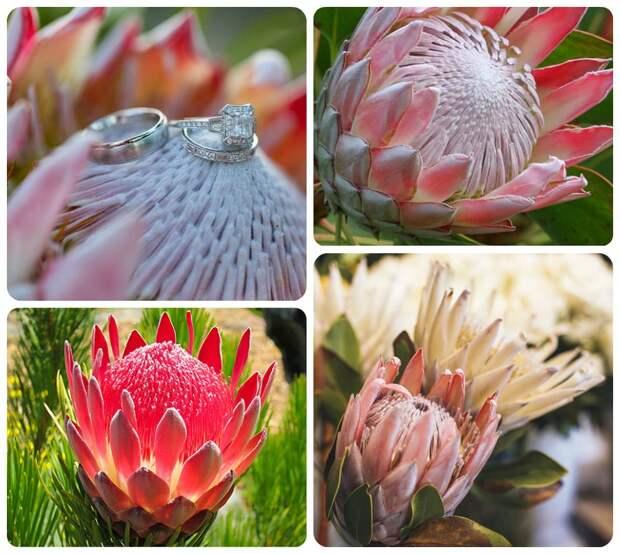 5 красивых тропических цветов