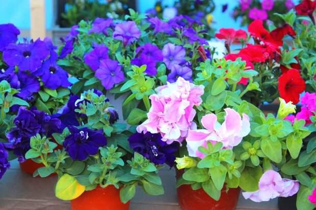 Цветы, которые не покупают: дачники стали меньше тратить в Уссурийске