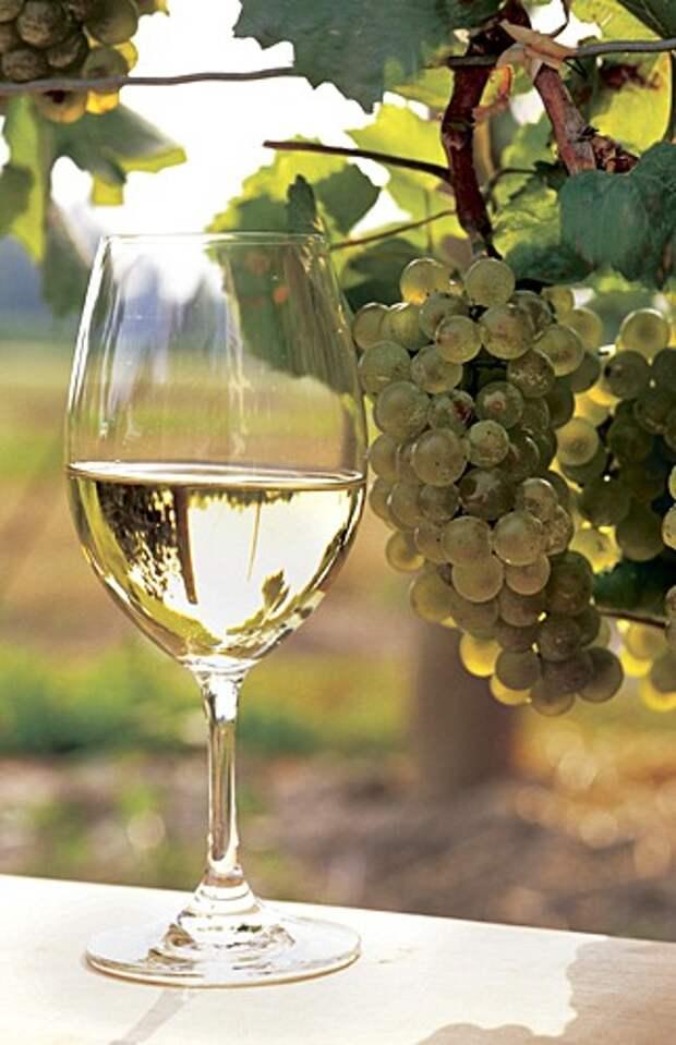 http://intervitis.ru/wp-content/gallery/gallery/white_wine.jpg