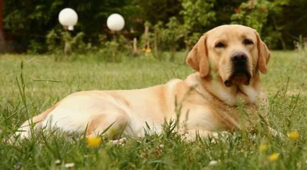 Самые умные породы собак по словам ученых