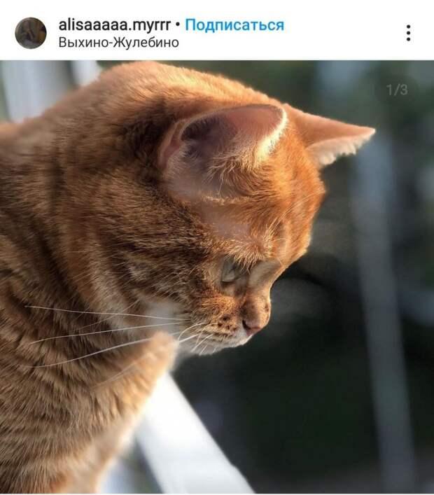 Фото дня: кот всегда на посту