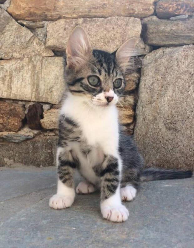 Нашла котенка в метро с больными глазками, но через некоторое время мы вылечили его и из него вырос красивый и здоровый кот.