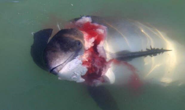 Ученые предупредили об опасности тюленей для дельфинов и людей