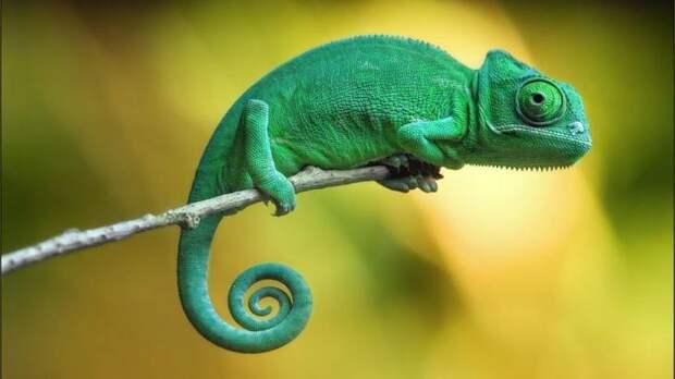 Животные и их удивительные особенности