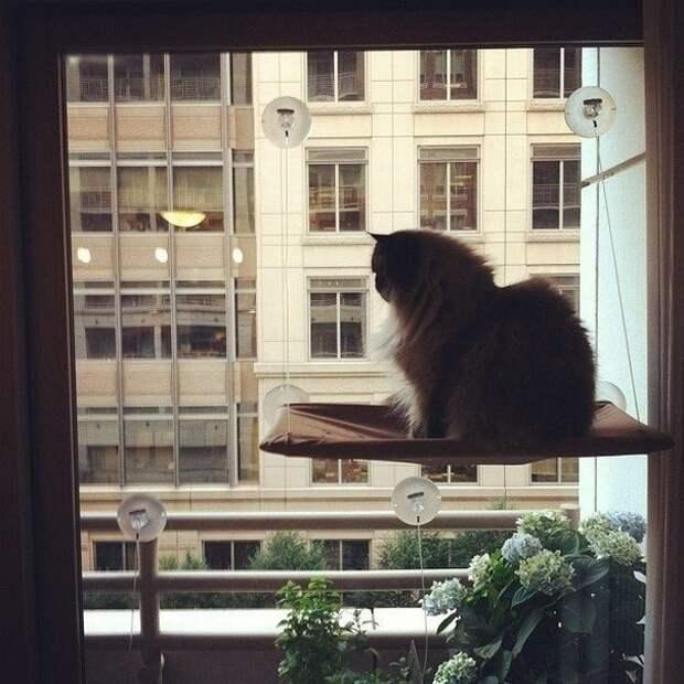 Кот на присосках