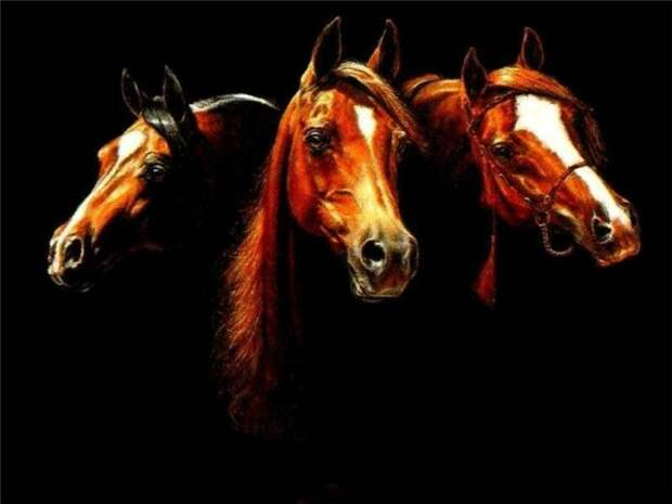 Наши любимые лошади. - Блог - Привет.ру