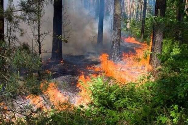 В Краснодарском крае до 29 июля будет пожароопасно