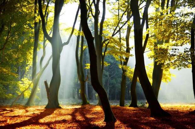 Красивые фотографии природы от Lars van de Goor