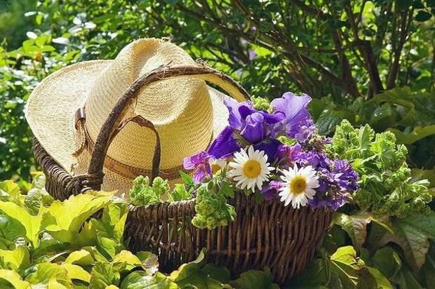 Лунный календарь для садоводов и огородников на август