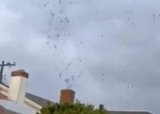 Сотни перелетных птиц проникли в жилой дом через каминную трубу
