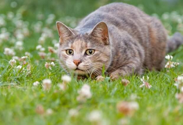 Если кот дерет туалетную бумагу: простое объяснение и способы, как от этого отучить
