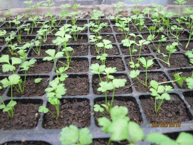 Органическое земледелие - Part 17