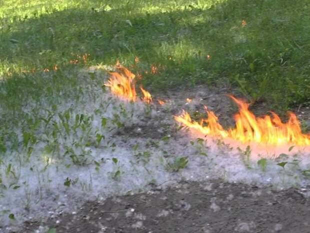 Управление МЧС по СЗАО напоминает, что нельзя поджигать тополиный пух