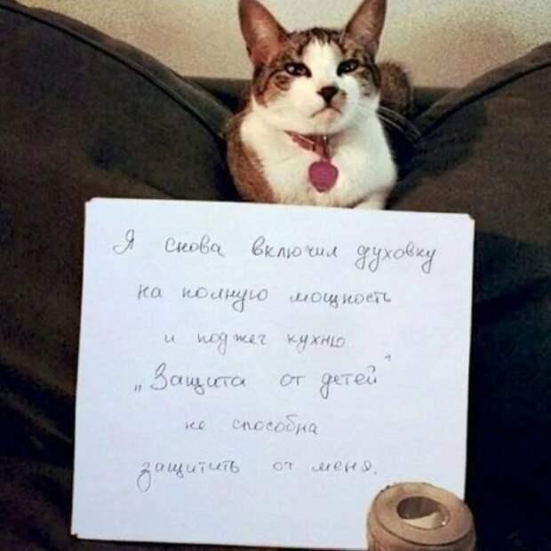 кот с запиской хозяйки