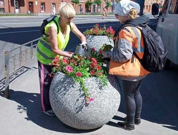 В Петрозаводске высадят 218 тысяч растений