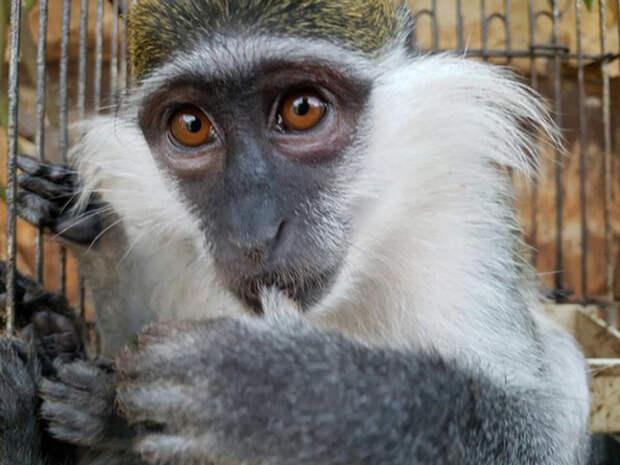 Маленькие обезьянки находились в заточении целых полгода.