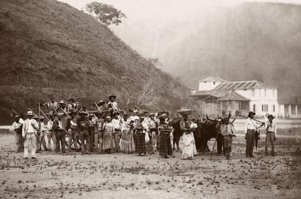 Рабы на кофейной ферме в Рио де Жанейро, Бразилия, 1885 год (Instituto Moreira Salles)