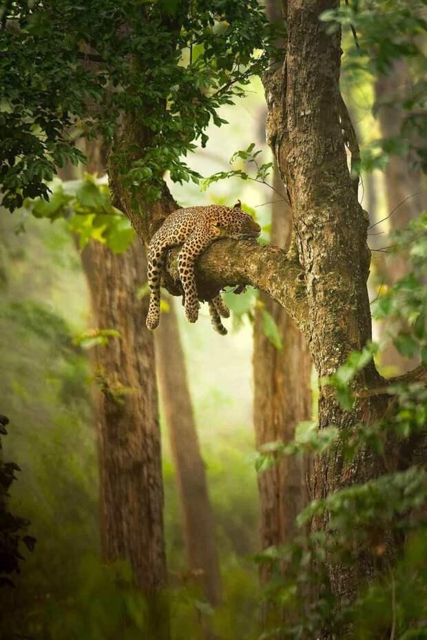 25 захватывающих фотографий, которые показывают всю мощь и разнообразие природы