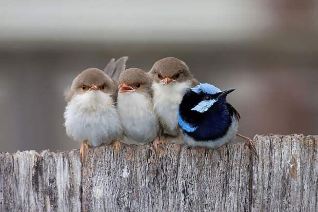 13.  красота, природа, птицы, фото