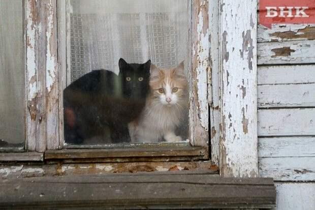 Половина владельцев собак и кошек в России готовы брать их на работу, показал опрос
