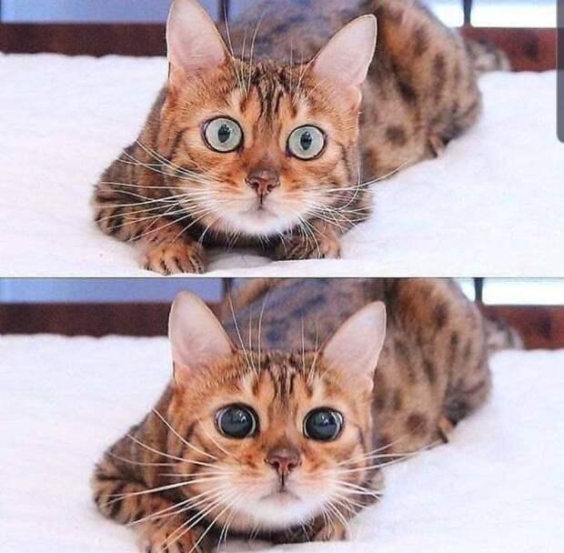 14 фото о котах как самодостаточных питомцах